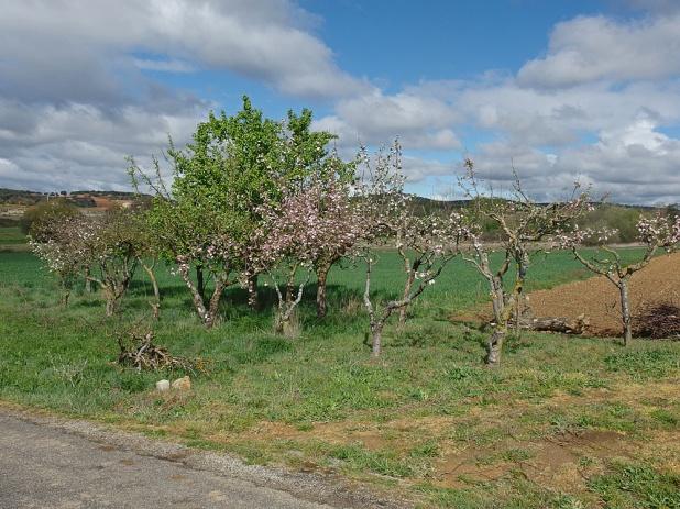 Weiter in Richtung Astorga